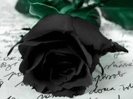 rosa negra.jpg