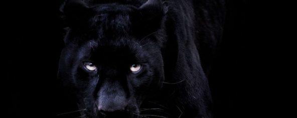 cropped-black-panther3.jpg